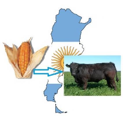 EL FUTURO DEL MAÍZ ARGENTINO