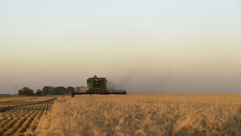 Estiman que la cosecha de trigo va a inyectar unos 720 millones de pesos